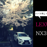 レクサスNX300と桜の写真